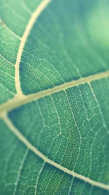 papers.co-mj83-leaf-bokeh-green-nature-34-iphone6-plus-wallpaper